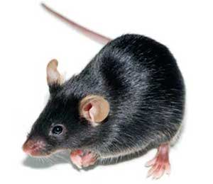 black-mouse-icon-300.jpg