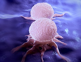 two breast cancer cells dividing