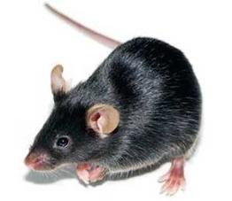 black-mouse-icon-300-8.jpg